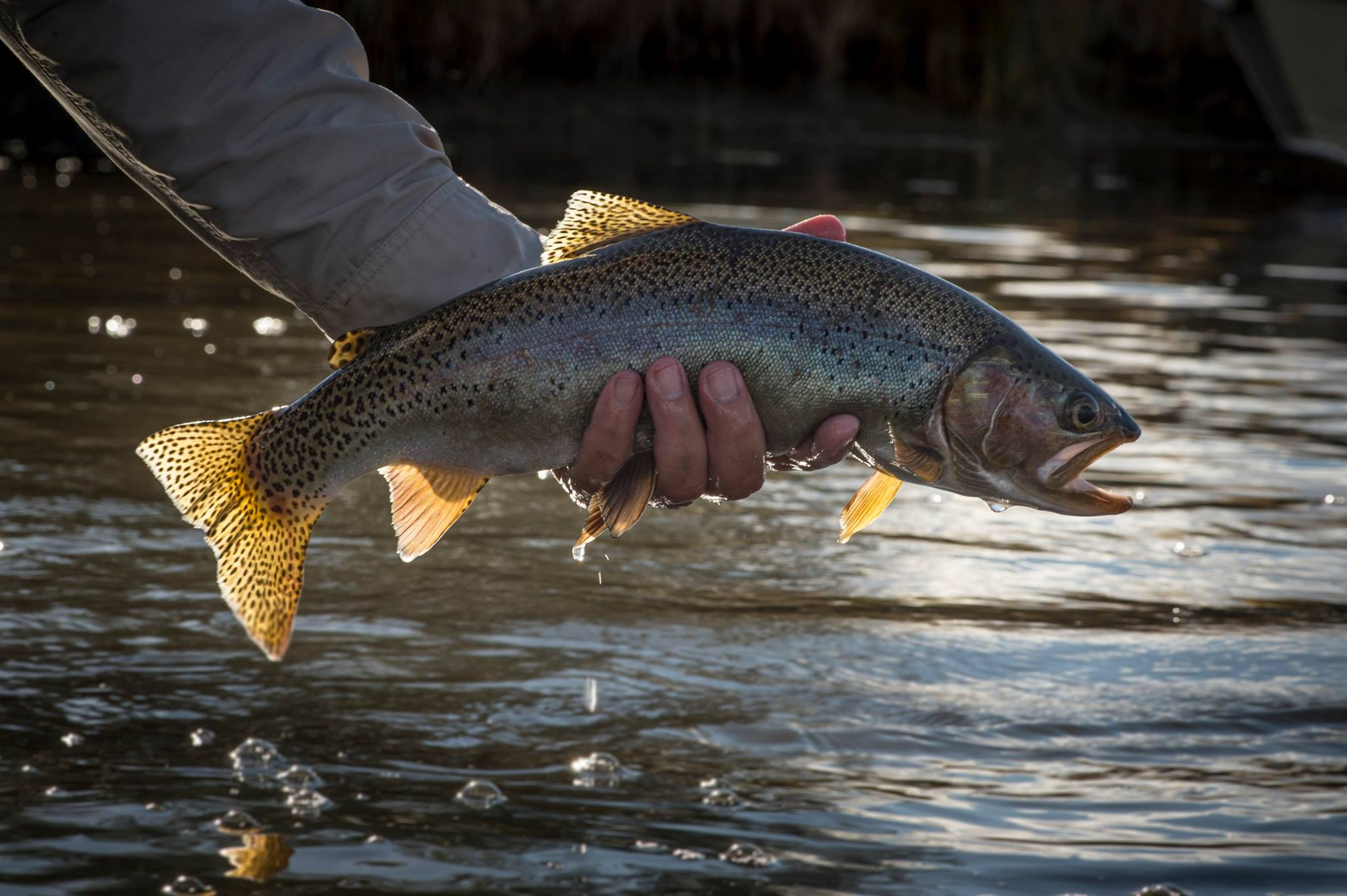 Fly Rod Chronicles Fly Fishing the North Platte Part II