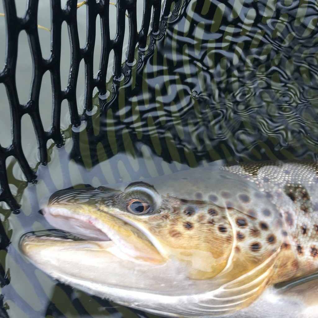 October Fly Fishing on the North Platte
